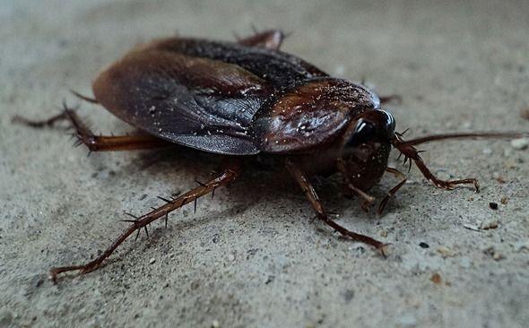 Entreprise de lutte contre les infestations de cafards à Paris