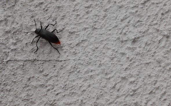 Désinfection d'insectes à Paris et en Ile de France