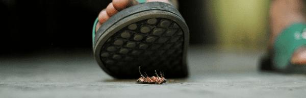 Comment prévenir une infestation de punaises de lit ?